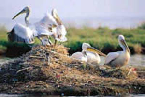 Το κυνήγι των υδροβίων πτηνών στην Ευρωπαϊκή Ένωση
